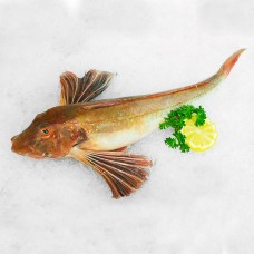 Gurnard whole