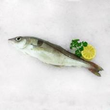 Haddock Whole