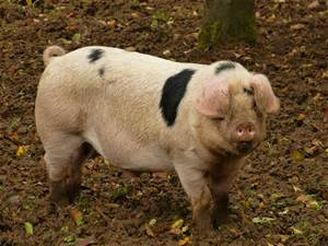 Fresh Cornish Pork, Sausages & Bacon
