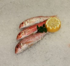 Red Mullet whole