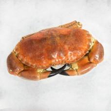 Crab whole1