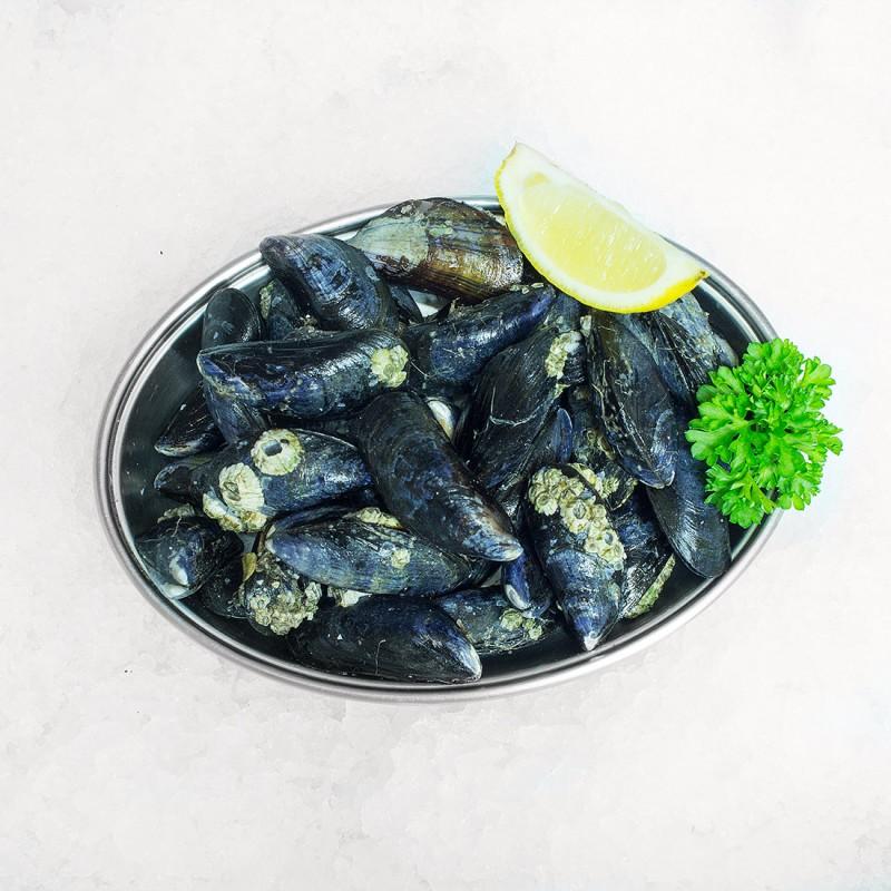 Mussels wild